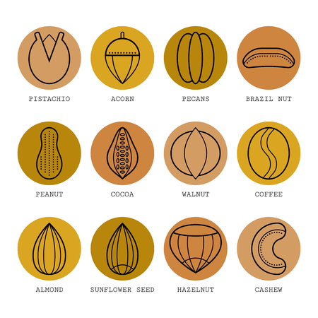 brazil nut: Set of flat different nuts. Vector illustration.