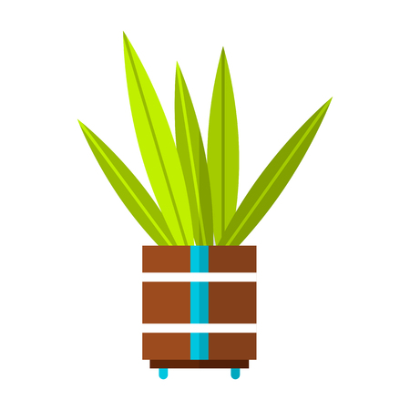 Cactus, succulent. Flat color icon, illustration of potted plant isolated on white background. Object for design Stock Photo