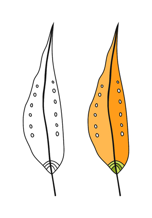 Colored leaf, black and white illustration for coloring book, pages