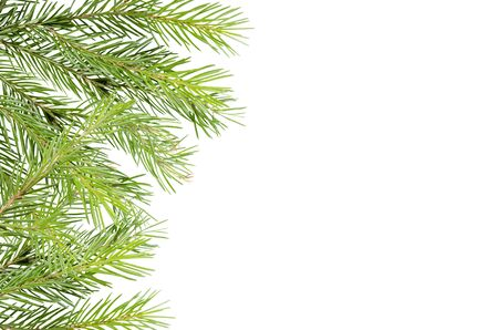 Spruces, pine branches on a white background with place for text. Background for advertising, greeting cards. 版權商用圖片