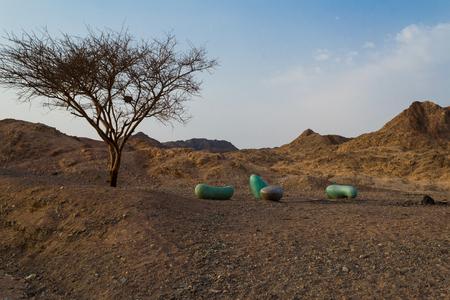 negev: Acacia tortilis, Negev