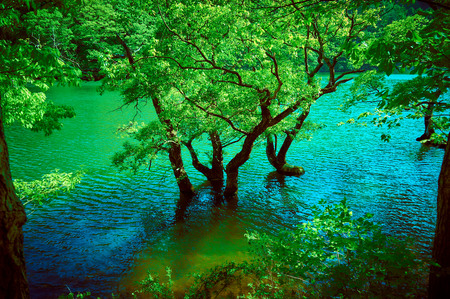 producing: Salix Chaenomeloides wood submerged in water Stock Photo