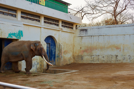 An elephant from a zoo