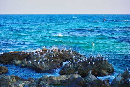 Sea, rock, gull