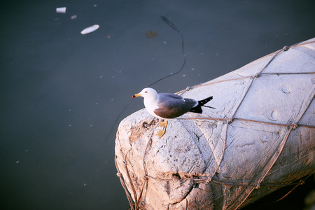 A seagull resting on a buoy Stock Photo
