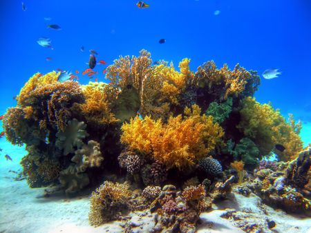 Coral particular from Red Sea