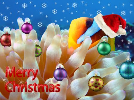 Underwater Christmas Card. Anemone fish celebrating the christmas