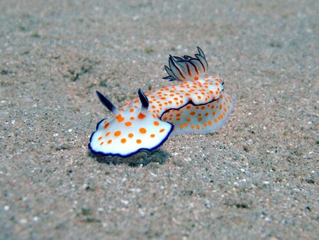 nudi: Beautiful Risbecia