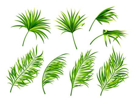 Hojas tropicales aisladas sobre fondo blanco.Ilustración de vector botánico.