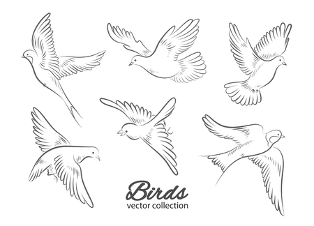 Set of hand drawn birds isolated on white background. Vector illustration.