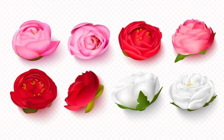 Set of peony buds on a transparent background.3D flowers for invitations, banners, cards. Vector illustration.