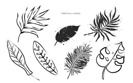 Set of tropical leaves in the grunge style. Vector collection of hand-drawn plants. Various leaf shapes drawn with a brush. Illustration