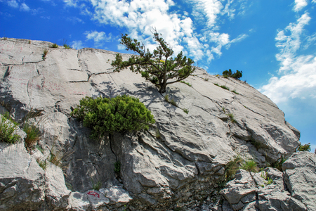 dwarfish: The bushes and dwarfish trees growing on the rock.  Thirst to life.  Germinate  through the rock