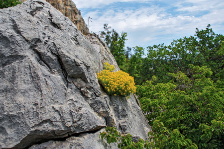 germinate: Yellow flowers growing on the rock. Thirst to life.  Germinate  through the rock Stock Photo