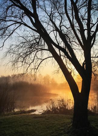 through: Sun rays break through the tree. Tree in the foreground. Sunrise over the river