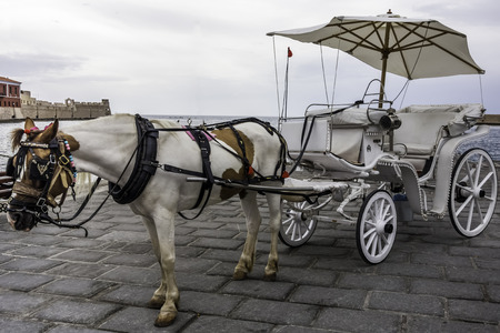 blinders: Horse-drawn carriage with horse
