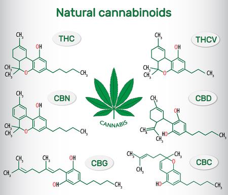 Chemical formulas of natural cannabinoids in plants of the genus cannabis : tetrahydrocannabinol, tetrahydrocannabivarin  , cannabidiol, cannabinol , cannabigerol and cannabichromene. Vector illustration