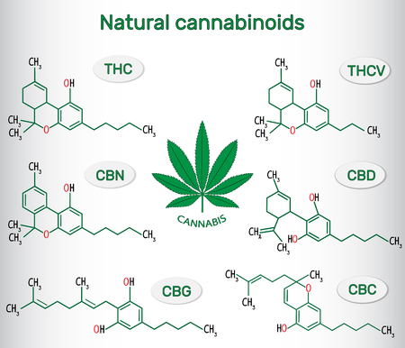 Chemical formulas of natural cannabinoids in plants of the genus cannabis : tetrahydrocannabinol, tetrahydrocannabivarin  , cannabidiol, cannabinol , cannabigerol and cannabichromene. Vector illustration