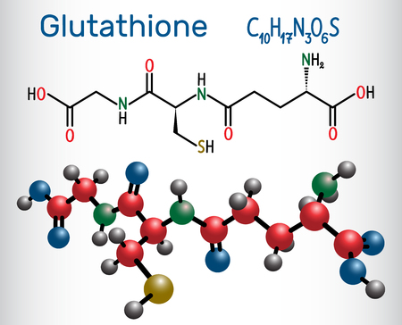 Glutathione Structural chemical formula and molecule model. Vector illustration Ilustração