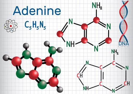 Adenina (A, Ade) - nucleobasi purinica, unità fondamentale del codice genetico nel DNA e nell'RNA. Formula chimica strutturale e modello di molecola. Foglio di carta in una gabbia. Illustrazione vettoriale Archivio Fotografico - 96447728