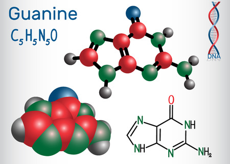 Guanine (G, Gua) - purine nucleobase, fundamental unit of the genetic code in DNA and RNA. Structural chemical formula and molecule model. Vector illustration