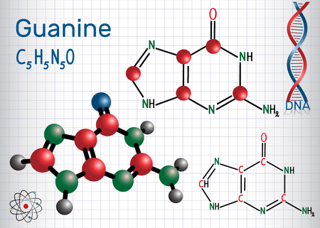 Guanine (G, Gua) - purine nucleobase, fundamental unit of the genetic code in DNA and RNA. Structural chemical formula and molecule model. Sheet of paper in a cage. Vector illustration