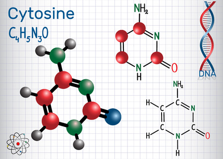 Cytosine (C) - pyrimidine  nucleobase, fundamental unit of the genetic code in DNA and RNA. Sheet of paper in a cage. Structural chemical formula and molecule model. Vector illustration