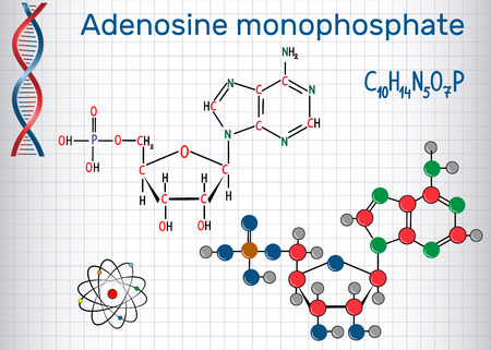 Adenosine monophosphate (AMP) molecule, it is an ester of phosphoric acid and the nucleoside adenosine monomer in the production RNA. Sheet of paper in a cage. Structural chemical formula and molecule model. Vector illustration.