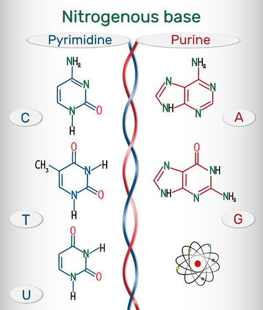 Chemical structural formulas of purine and pyrimidine nitrogenous bases: adenine (A, Ade), guanine (G, Gua), thymine (T, Thy), uracil (U), cytosine (C)). Fundamental units of the genetic code in DNA and RNA. Vector illustration. Stock Illustratie