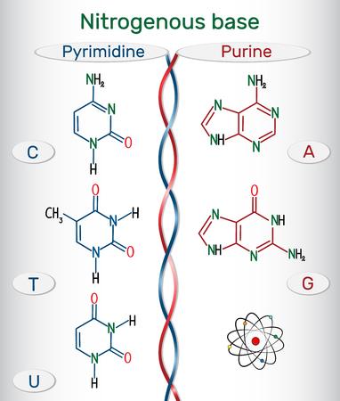 Chemische structuurformules van purine en pyrimidine stikstofbasen: adenine (A, Ade), guanine (G, Gua), thymine (T, Thy), uracil (U), cytosine (C)). Fundamentele eenheden van de genetische code in DNA en RNA. Vector illustratie Stockfoto - 96625049