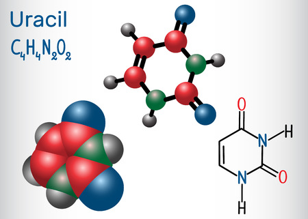 Uracil (U) - pyrimidine nucleobase in the nucleic acid of RNA. Structural chemical formula and molecule model. Vector illustration. Illustration