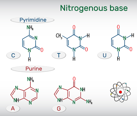 Chemical structural formulas of purine and pyrimidine nitrogenous bases: adenine (A, Ade), guanine (G, Gua), thymine (T, Thy), uracil (U), cytosine (C)). Fundamental units of the genetic code in DNA and RNA. Vector illustration. Vettoriali