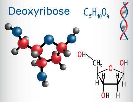 Deoxyribose molecule structural chemical formula and molecule model.