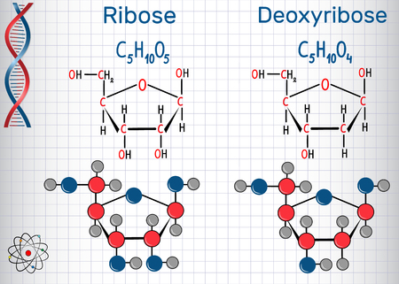 Ribose and deoxyribose molecules, they are monosaccharides and form part of the backbone of DNA and RNA. Banco de Imagens - 96568925