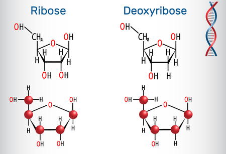 Structural chemical formula and molecule model of Ribose and deoxyribose molecules, illustration