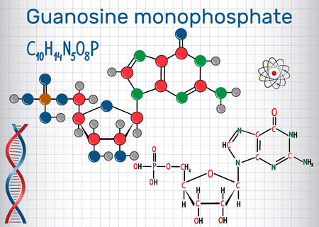 Guanosine monophosphate (GMP) molecule, monomer in RNA . Structural chemical formula and molecule model. Sheet of paper in a cage. Vector illustration Illustration