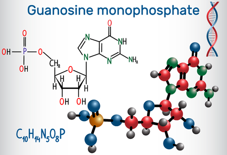 Guanosine monophosphate (GMP) molecule, it is an ester of phosphoric acid with the nucleoside guanosine, monomer in RNA . Structural chemical formula and molecule model. Vector illustration.