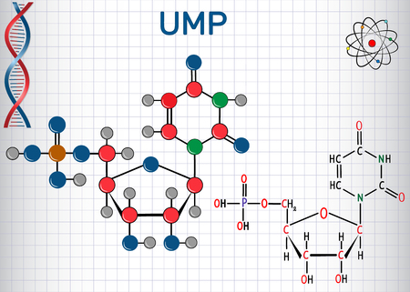Uridine monophosphate (UMP) nucleotide molecule, monomer in RNA. Structural chemical formula and molecule model. Sheet of paper in a cage. Vector illustration