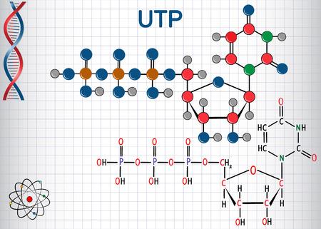 La molecola nucleotidica dell'uridina trifosfato (UTP) viene utilizzata per la sintesi dell'RNA. Formula chimica strutturale e modello di molecola. Foglio di carta in una gabbia. Illustrazione vettoriale Archivio Fotografico - 97417803