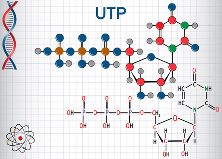 Uridine triphosphate (UTP) nucleotide molecule , is used for the synthesis of RNA. Structural chemical formula and molecule model. Sheet of paper in a cage. Vector illustration