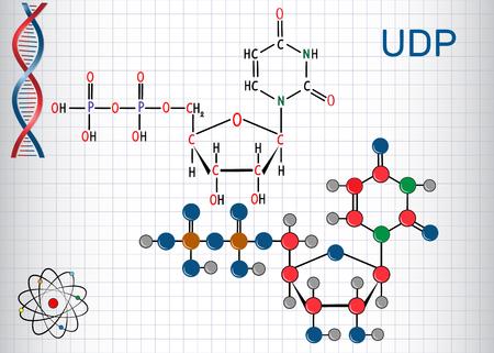 Uridine diphosphate (UDP) nucleotide molecule. Structural chemical formula and molecule model. Sheet of paper in a cage.Vector illustration