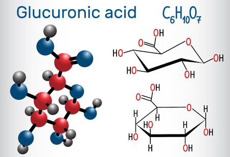 Glucuronic acid molecule, plays an important role in the metabolism of microorganisms, plants and animals. Structural chemical formula and molecule model. Vector illustration