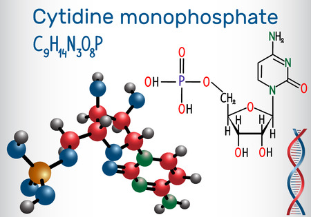 Cytidine monophosphate (CMP) molecule, it is an ester of phosphoric acid and the nucleoside cytidine, monomer in the RNA . Structural chemical formula and molecule model. Vector illustration