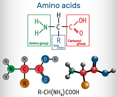 General formula of amino acids, which are building blocks of proteins and muscle fibers. Structural chemical formula and molecule model. Vector illustration