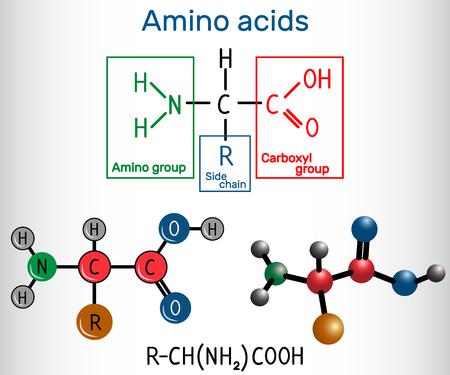 Formule générale d'acides aminés, qui sont des éléments constitutifs des protéines et des fibres musculaires. Formule chimique structurelle et modèle de molécule. Illustration vectorielle