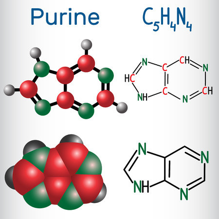Purine molecule, is a heterocyclic aromatic organic compound. Structural chemical formula and molecule model. Vector illustration