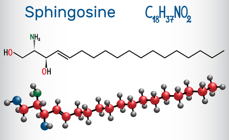 Sphingosine molecule . It is an amino alcohol , forms a primary part of sphingolipids. Structural chemical formula and molecule model. Vector illustration. Illustration