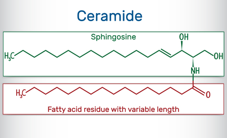 Ceramide molecule , is composed of sphingosine and a fatty acid. Structural chemical formula. Vector illustration.