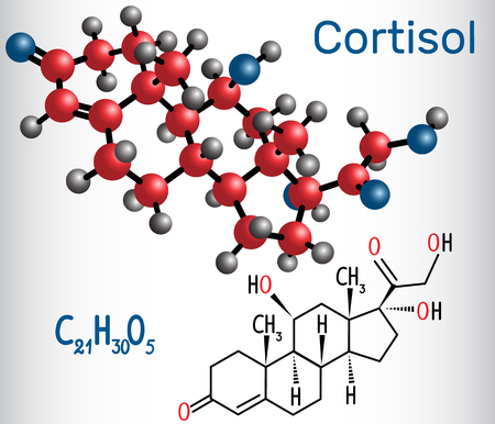 Cortisol (stress hormone) - structural chemical formula and molecule model. Vector illustration