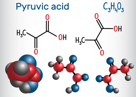 Pyruvic acid (pyruvate) molecule. It is the simplest of the alpha-keto acids. Structural chemical formula and molecule model. Vector illustration 向量圖像